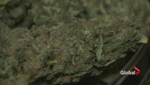 Pharmacies considering selling legal medical marijuana