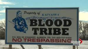 Blood Tribe votes to accept $150M settlement over mismanaged cattle