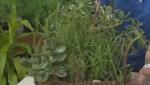 Get Gardening Part 4 – Succulents
