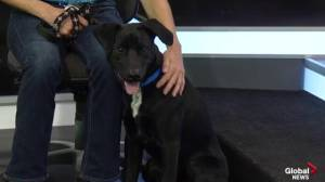 Edmonton Humane Society: Gretzky & Butler