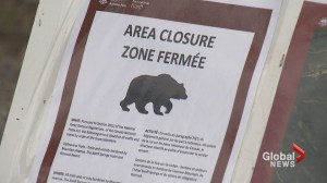 Officials close popular area in Banff after bear incident