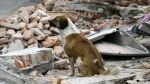 Mexico's biggest earthquake to hit in a century kills dozens