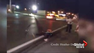 Michael Brown demonstrator hit by car during protest