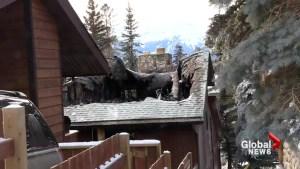 Overnight fire guts Banff home