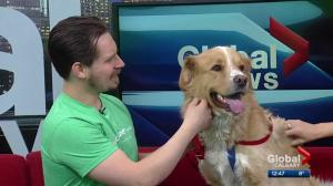 Calgary Humane Society Pet of the Week: Randy