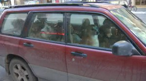 Dog walker responds to leaving several dogs in vehicle during extreme cold weather alert