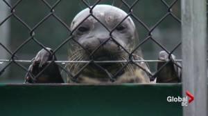 Vancouver Aquarium Marine Mammal Rescue Centre broken into