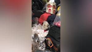 California wildfires: Rabbit rescued from fires left badly burned, later 'put to sleep'
