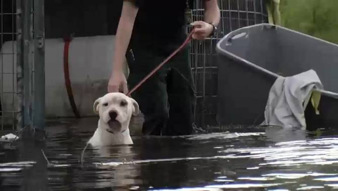 Dog Rescued From Sea