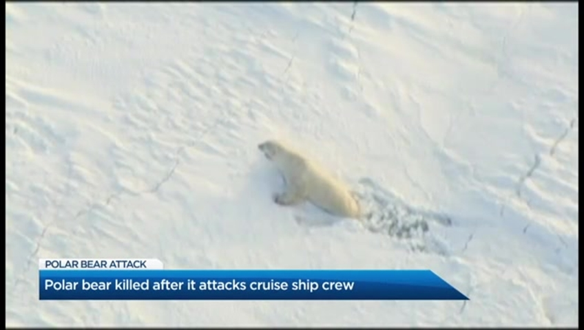 Russian islands declare emergency over polar bear `invasion`