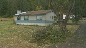 Okanagan cleaning up after damaging windstorm