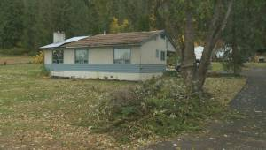 Okanagan cleaning up after damaging windstorm