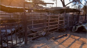 California wildfires: Horses tried to escape but not all of them made it