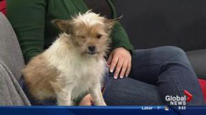Second Chance Animal Rescue Society: Si the special dog