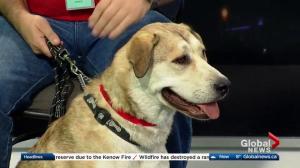 Edmonton Humane Society: Koomba & Angela