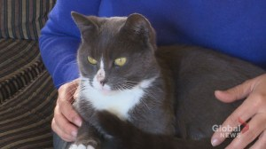 Meet Lola: The cat who came back to her family four months later