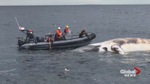 New rules around fishing gear coming to protect right whales: LeBlanc