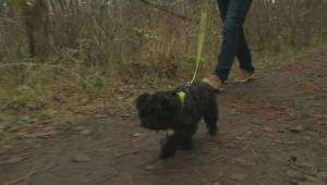 Tail docking ban now in effect in B.C. (02:06)