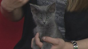 Adopt a Pet: Bandon the kitten