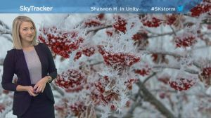 3-day forecast: fog, frost and warm weather