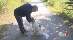 Dog attacked by coyote on Halifax trail last Saturday