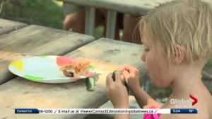 Have a picky eater? New study says don't force your kids to eat