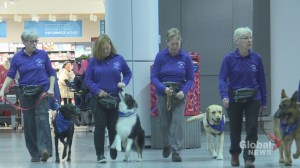 Emotional support dogs at Montreal airport