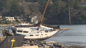 Sailboat stranded in windstorm defies removal efforts