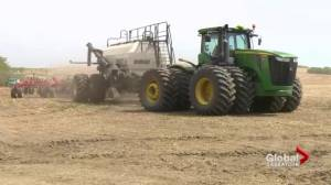 Your Agriculture: clubroot disease in Saskatchewan