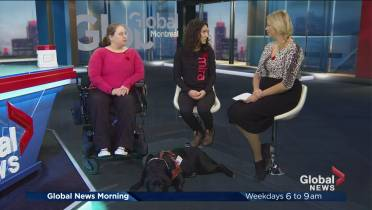 Cute pups in training for serious, life-changing work | Globalnews ca