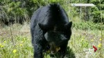 Black bear spotted in provincial park east of Calgary