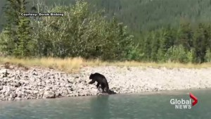 Off-leash dog seen chasing bear near Canmore