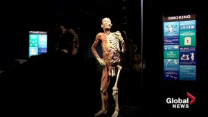 Exhibit featuring preserved human bodies in Atlantic Canada for 1st time