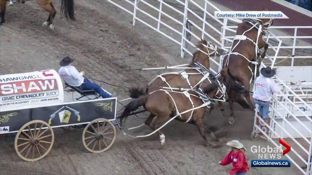 Horse Injured At Calgary Stampede S Half Mile Of Hell