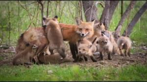 Peterborough area seeing spike in rabies investigations