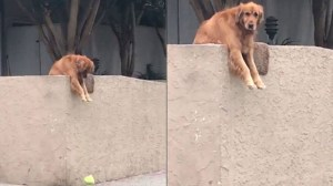 Dog tricks strangers into playing with him