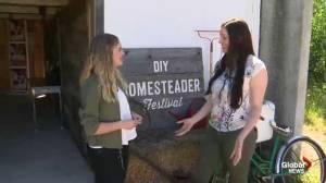 DIY Homesteader Festival: Fermenting foods