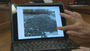 Province issues first fines for zebra mussel contaminated boats in Manitoba