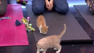 VOKRA kitten yoga