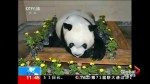 World's oldest panda in captivity dies in China