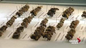 New Lethbridge group creates a lot of buzz