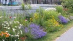 """Gardening 101: How to create your own """"Pollinator Patch"""""""