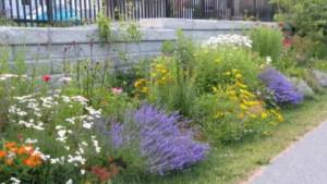 "Gardening 101: How to create your own ""Pollinator Patch"""