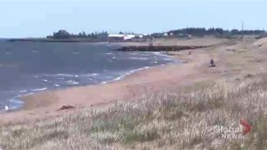 Cap-Pele beach first in N.B. to receive prestigious distinction