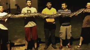 Oklahoma teen shocked to find 14-foot python in his backyard