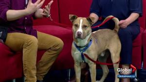 Pet of the Week: King