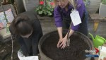 Gardenworks: Planting fruit trees