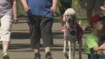 Service dog advocates raise concerns over fake tags and vests