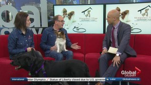 Calgary veterinarian offers alternative therapy for animals