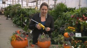 Gardening Tips: Thanksgiving table centrepieces